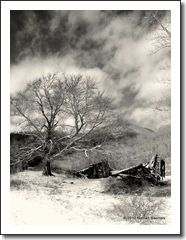 Changes  - Toned Black and White Photo Print 16 x 20 - unframed