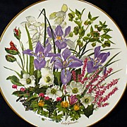 Franklin Porcelain January Flowers Of The Year Plate Wedgwood 1977