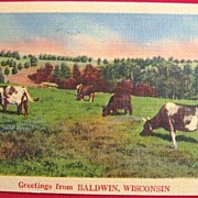 1949 Linen Postcard of Cows Grazing in Baldwin, Wisconsin  NYCE