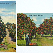 Two 1940s Linen Postcards of Florida Orange Picking