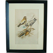Vintage Watercolor Painting of Evening Grosbeak Yellow-Billed Cuckoo Birds Framed by Dorothy G