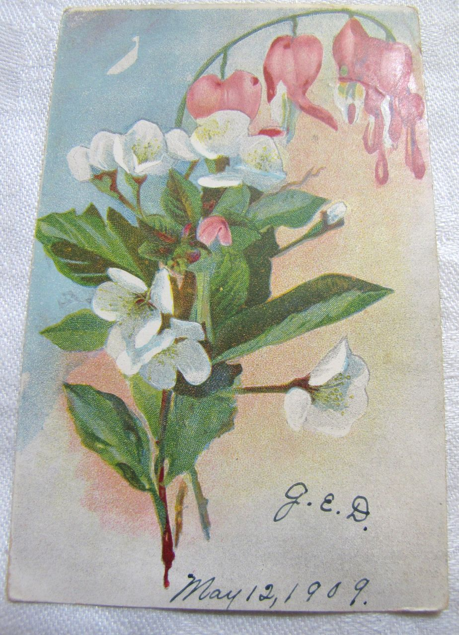1909, Beautiful German Postcard of Painted Flowers 1909‏