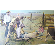 Early 20th Century Postcard &quot;Branding Time On The Ranch&quot;&#8207;