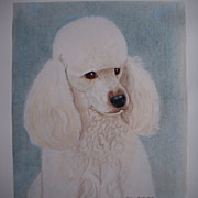 excellent drawing of a Clipped White Poodle