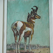 Pronghorn Antelope,Original etching,listed