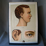 Physicians' Anatomical Aid 1889 ~ Large Manikin ~ Educational Flip Book