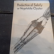 "SALE Vintage - ""Production of Salsify or Vegetable-Oyster"", US Dept of Agriculture,"