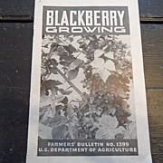 "SALE Vintage ""Blackberry Growing"", US Dept of Agriculture, 1942"