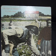Postcard Black Americana Cotton Picking