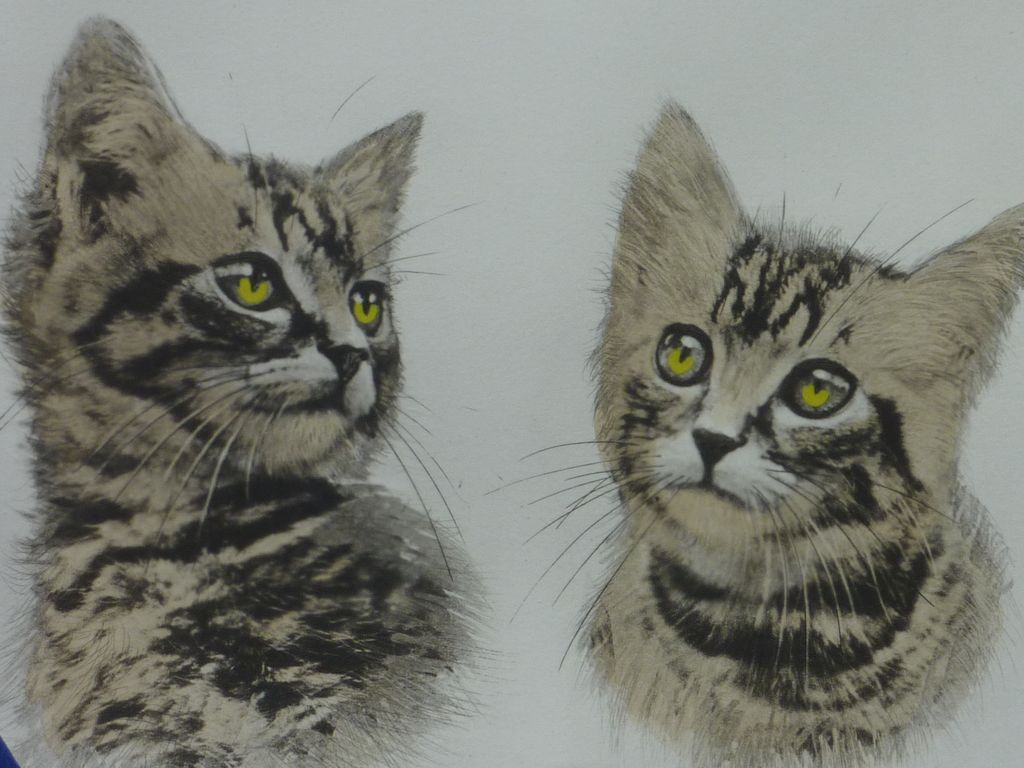 Studies Of A Tabby Cat Etching With Aquatint Print Signed