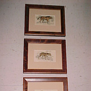 Set of 3 Framed Steel Engravings  Wild Dogs Wm. Jardine 1836