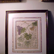 Framed Antique Copperplate Botanical Engraving Wine Grapes 1813 Berlin