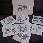 Antique Botanical Copperplate Engravings 1743 (lot of 8)