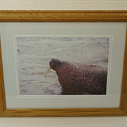 Wildfowl Art Gallery  Framed Matted Photograph Walrus 17in x 13in x 1in Vintage  Glass Paper