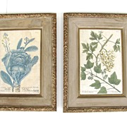 Pair Original Early Botanical Engraving of Cabbage and White Grapes
