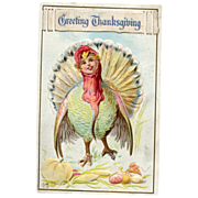 Greetings Thanksgiving Postcard