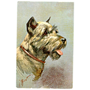 Pinscher Schnauzer Post Card Artist  Signed