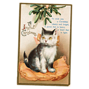 Kitten International Christmas Postcard