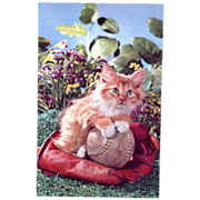 Baseball Glove & Ball & Kitten Squeaker Postcard
