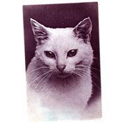 White Cat Squeaker Postcard
