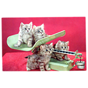 Kittens on a Scale Squeaker Postcard