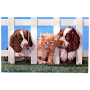 Kittens & Spaniel Puppy Squeaker Postcard Toy