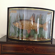 SOLD Antique Taxidermy F.W Antiss Fish