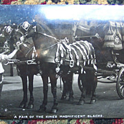 Real Photo of King Edward Vll's Carriage Horses - Early 1900's