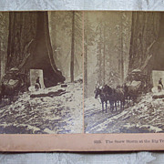 Snow Storm at the Big Trees, Yosemite Stereo view Card - 1894