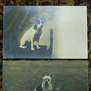 SOLD Real Photo Postcards of Two Dogs - Early 1900's