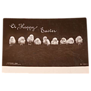Easter Photo Postcard - Chicks in a Row!  Delightful!!