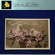 Delightful Vintage Photo Postcard - Chicks on a Blossomed Branch 1911