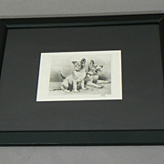 Vintage etching German Shepherd puppies dog pencil signed