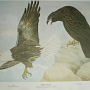 Bald Eagle/ Golden Eagle  2 sided print Rex Brasher