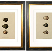 "William Lewin, ""Bird Eggs""  Hand-colored Engravings, c. 1794"