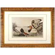 1836 Canvas Backed Duck Audubon