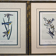 Antique /hand-colored Audubon Birds