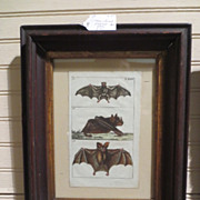 Antique Framed Etching of Three Bats