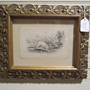 Framed Antique Etching of Rabbit Fine Art