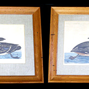 REDUCED Framed c.1766 Copper Plate Duck Etchings - P. Mazell after Paillou
