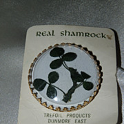 Genuine Shamrock from Killerny, Ireland enclosed in a vintage pin