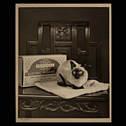 C. 1920's California Pictorialist Maude Stinson Siamese Cat Photograph