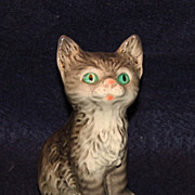 Great Goebel Kitten with Green Eyes