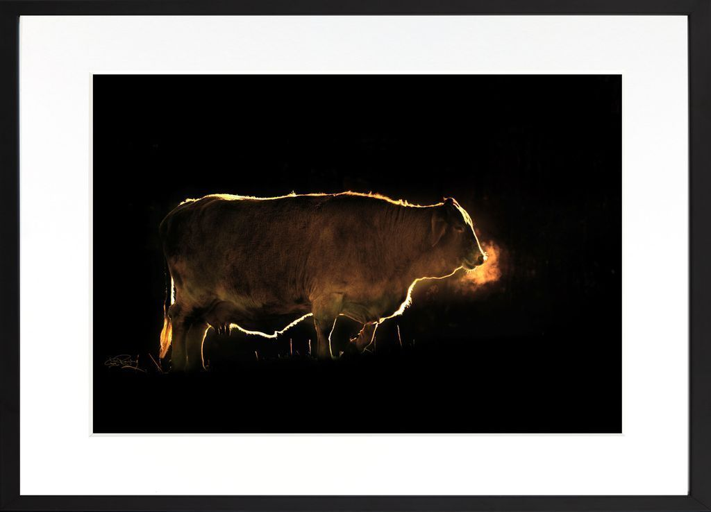 """Holy Cow"" Greg Newington, Limited Edition Prints"