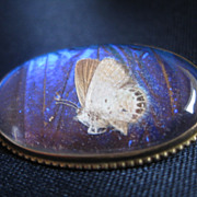 Unique Vintage Butterfly Wing Brooch