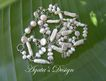 White Freshwater Pearls ~ Sterling Silver ~ Necklace