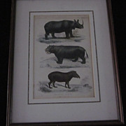 Color Plate, Mammalia, William Mackenzie, Charles Landseer