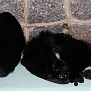 Vintage Genuine Black Fur Hand Warmer Muff and Shoulder Wrap