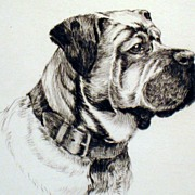 Bull Mastiff dog etching - Artist David Gee