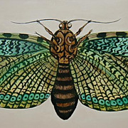 Original Dave Wilcox California Painting of a Butterfly